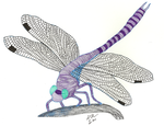 Dragonfly by nizo