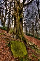 Yorkshire Woodland by taffmeister