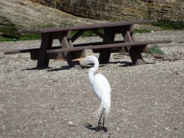 Bench Egret by cinnamontwoyou