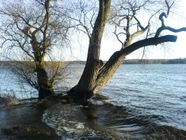 Trees in High Water- STOCK II by ChaosStocks