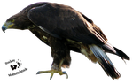 Cut-out stock PNG 31 - eagle profile by Momotte2stocks