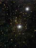 Fireflies and Fairies by Lady Masko by IconicJohn