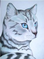 Silverstream by x----eLLiE----x