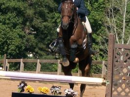 Stirrupless jump by hestur