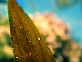 Dew Drops by RenaxRazorblade