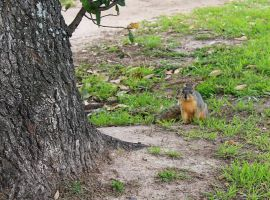 SQUIRREL!!! by task002