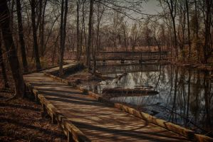 Wetlands in the Morning by boron