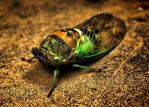 Cicada HDR by IBeHoey