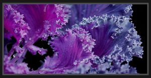 Purple Waves of Kale by andras120