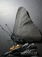 Black Paper Sculpture - Butterfly by 8thLeo