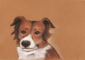 Another Border collie by clotus