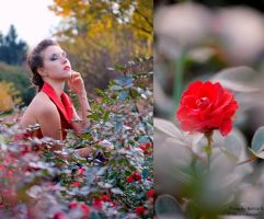 The smell of rose by Fabera