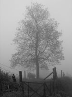 The Mist in Vlezenbeek 3 by PHNTM-237