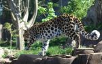 Leopard 20120905-2 by FurLined