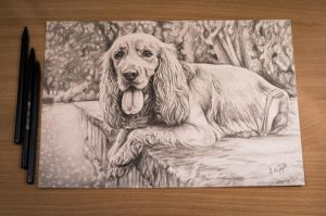 Primo - Cocker Spaniel Angielski by AnnaP-Artwork