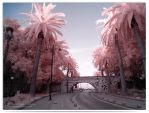 Palm Tree Avenue - infrared by LightSculpting