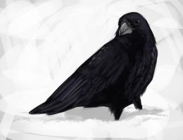 Crow by ennemme