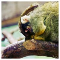 Sleepy Monkey by MissTick