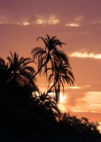 Twin Palms by Lightkast