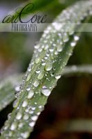 Wet plant by AliceArtCore