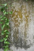 Green Wall 01 by CD-STOCK