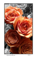Valentines Roses 2014 by ElysianImagery