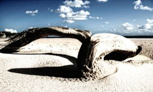 Bleached Beached Log by nectar666