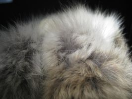 Rabbit Fur 39 by TRANS4MATICA