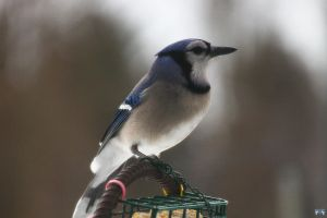 Blue Jay Way by LifeThroughALens84
