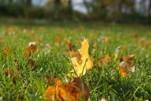 Autumn 2 by Cathie-Cat