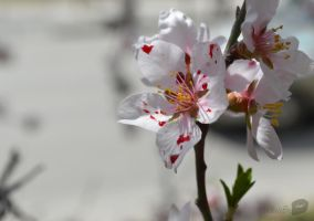 bloody flower by trollwaffle