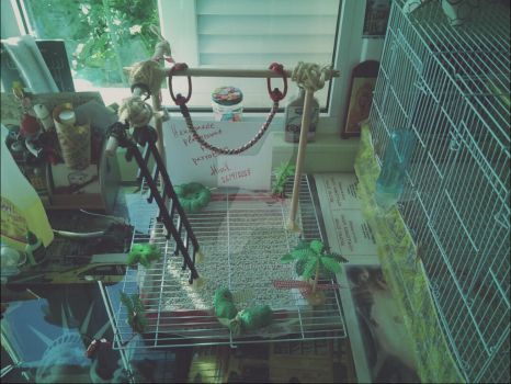 Handmade playground for parrots 2 by MissVeronici