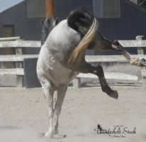 Grey Horse Stock 2 (Bucking) by Thunderbolt-Designs