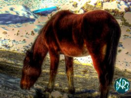 wild mustang hdr by DCRIII