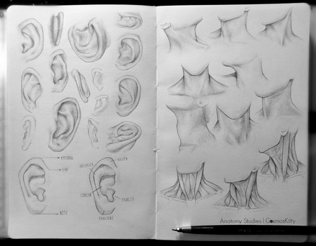 Anatomy Studies: Ears+Neck by CosmosKitty