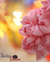 romantic time pink flower by yesmeena
