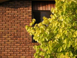 Tree and Brick wall by ashes-stock