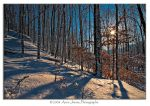 Winter Forest by Mystik-Rider