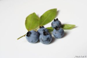 Wild Blueberries by Angel108