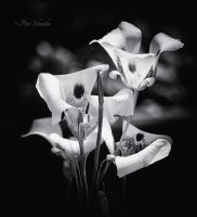 Tender beautys(Monocrom). by Phototubby