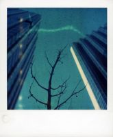 Polaroid Tree In The City by lloydhughes