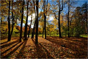 Autumn 2011... _15 by my-shots
