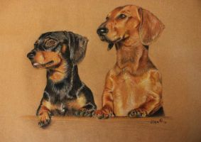 Skipper and Cooper by zileart