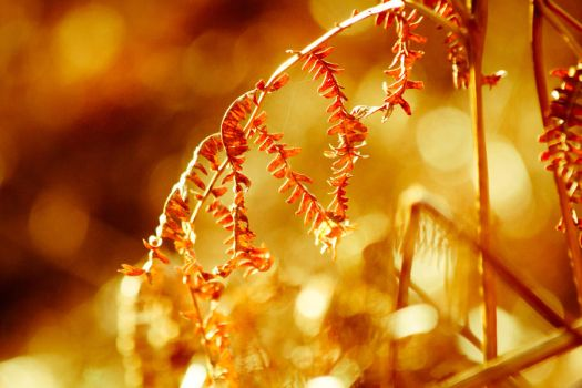 Broken Bracken Bokeh by derekbeattieimages