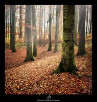 ...forest... by canismaioris