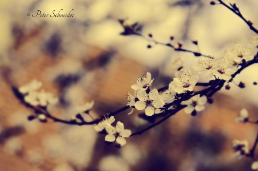 Spring mesage. by Phototubby