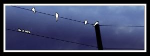 On A Wire by JJTM