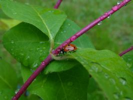 Coccinnelle 2 by eco6org