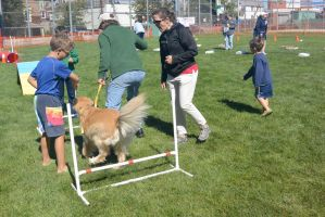 2014 Dog Festival, Try It Dog Obstacles 2 by Miss-Tbones