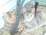 Mother and Daughter KittyPets by Zs99